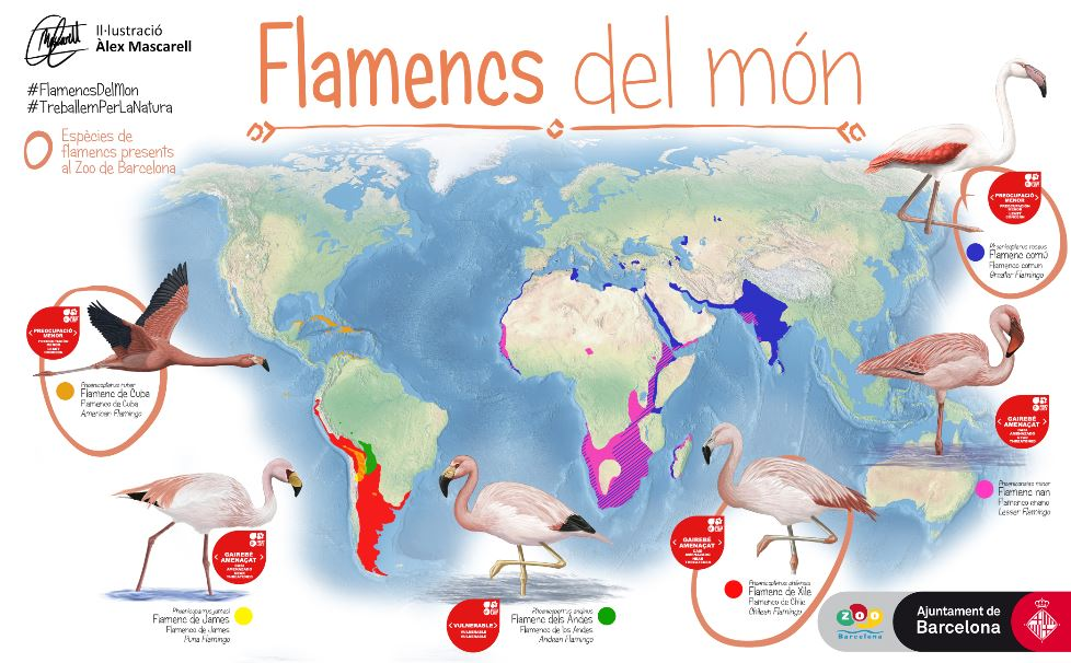 Flamingos of the world