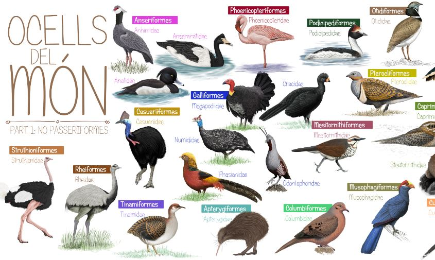 Birds of the World - No Passeriformes