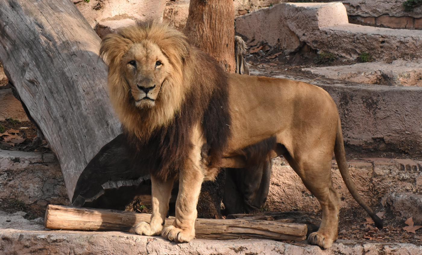 Mamífers Zoo de Barcelona